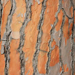Relief bark of an old tree close-up - Stock Photo