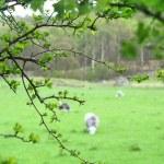 Spring landscape. — Stock Photo