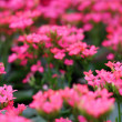 Blurred spring pink flowers. — Stock Photo