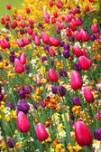 Beautiful spring colorful flowers. — Stock Photo