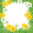 Vector of daffodil flowers frame for spring, Easter's design. — Stock Vector