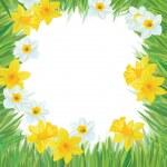 Vector of daffodil flowers frame for spring, Easter's design. — Stock Vector #23983107