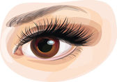 Vector of beautiful brown woman's eye. — Stock Vector