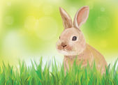 Vector of spring background with rabbit in green grass. — 图库矢量图片