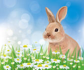 Vector of rabbit in flowers on sky background — Stock Vector