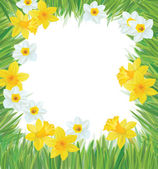 Vector of daffodil flowers frame for spring, Easter's design. — Stockvector