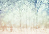 Winter landscape. — Stock Photo