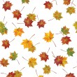 background of autumnal leaves. — 图库矢量图片