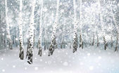 Winter snowy landscape — Stock Vector