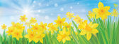 Vector of daffodil flowers on sky background. — Stock Vector
