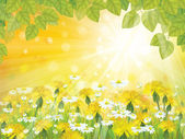 Vector sunshine background with branches of leaves, chamomiles — Stock Vector