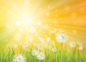 Vector of spring background with white dandelions. — Stock Vector