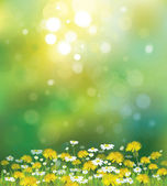Vector sunshine background with chamomiles and dandelions. — Stock Vector