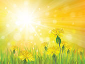 Vector of spring background with yellow dandelions. — Stock Vector