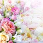 Roses flowers background. — Stock Photo