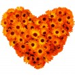 Stock Photo: Calendula flowers heart shape isolated.