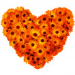 Stock Photo: Calendulflowers heart shape isolated.