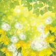 Spring background with yellow dandelions. — Stock Vector