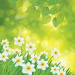 Daffodil flowers on spring background. — Stock Vector