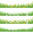 Stock Vector: Vector green grass with chamomiles and dandelions.