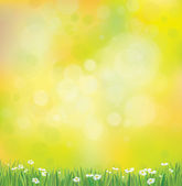 Background with grass and chamomiles. — Stock Vector