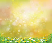 Background with chamomiles and dandelions. — Stock Vector