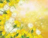 Vector dandelions background. — Stock Vector
