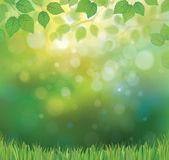 Vettore verde foglie rami ed erba — Vettoriale Stock