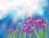 Vector spring crocuses flowers on sky background. — Stock Vector
