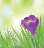 Vector crocus flower on spring background. — Vettoriale Stock