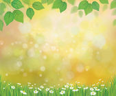 Vector sunshine background with chamomile and dandelion. — Stock Vector