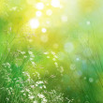 Spring nature background. — Stock Photo #40228247