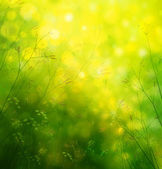 Spring nature background. — Stock Photo