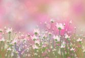 Vector flores rosas sobre fondo bokeh. — Vector de stock