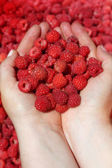 Raspberry in palm. — Stockfoto