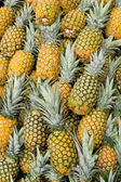 Pineapples at fruit market — Stock Photo