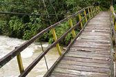 Ponte sospeso nella foresta pluviale — Foto Stock