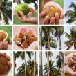 Tropical Scenes - Stock Photo
