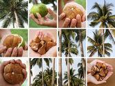 Tropical Scenes — Stock Photo
