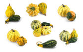 Pumpkin Collection — Stock Photo