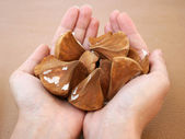 Handful of Exotic Palm Seeds — Stock Photo