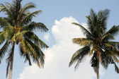 Two palms against the sky — Stock Photo