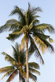 Palms on the Beach — Stock Photo