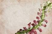 Textured Flower on Vintage Background — Stock Photo