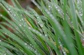 Rosée sur l'herbe — Photo