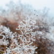 Grass covered with frost — Stock Photo #37753455