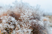 Grass covered with frost — Stock Photo