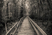 Wooden path in the forest — Stock Photo