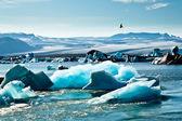 Artic Tern of Jokulsarlon Glacier Lagoon, Iceland — Stock Photo
