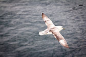 Seagull flying — Stock Photo